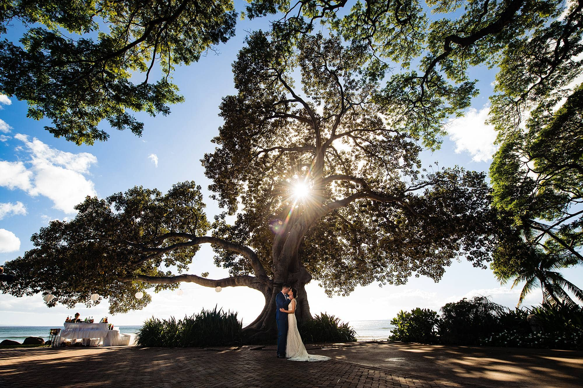 bride and groom under rubber tree at olowalu plantation house