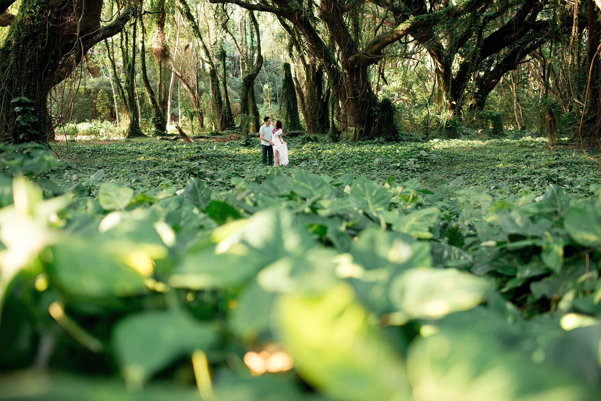Pregnant couple in a field of greens surrounded by Maui trees