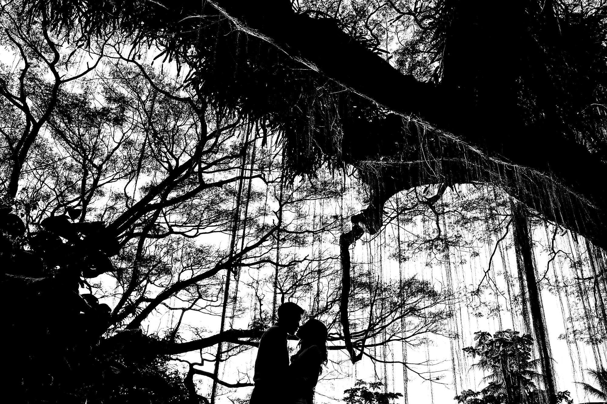 silhouetted photo with tree in maui