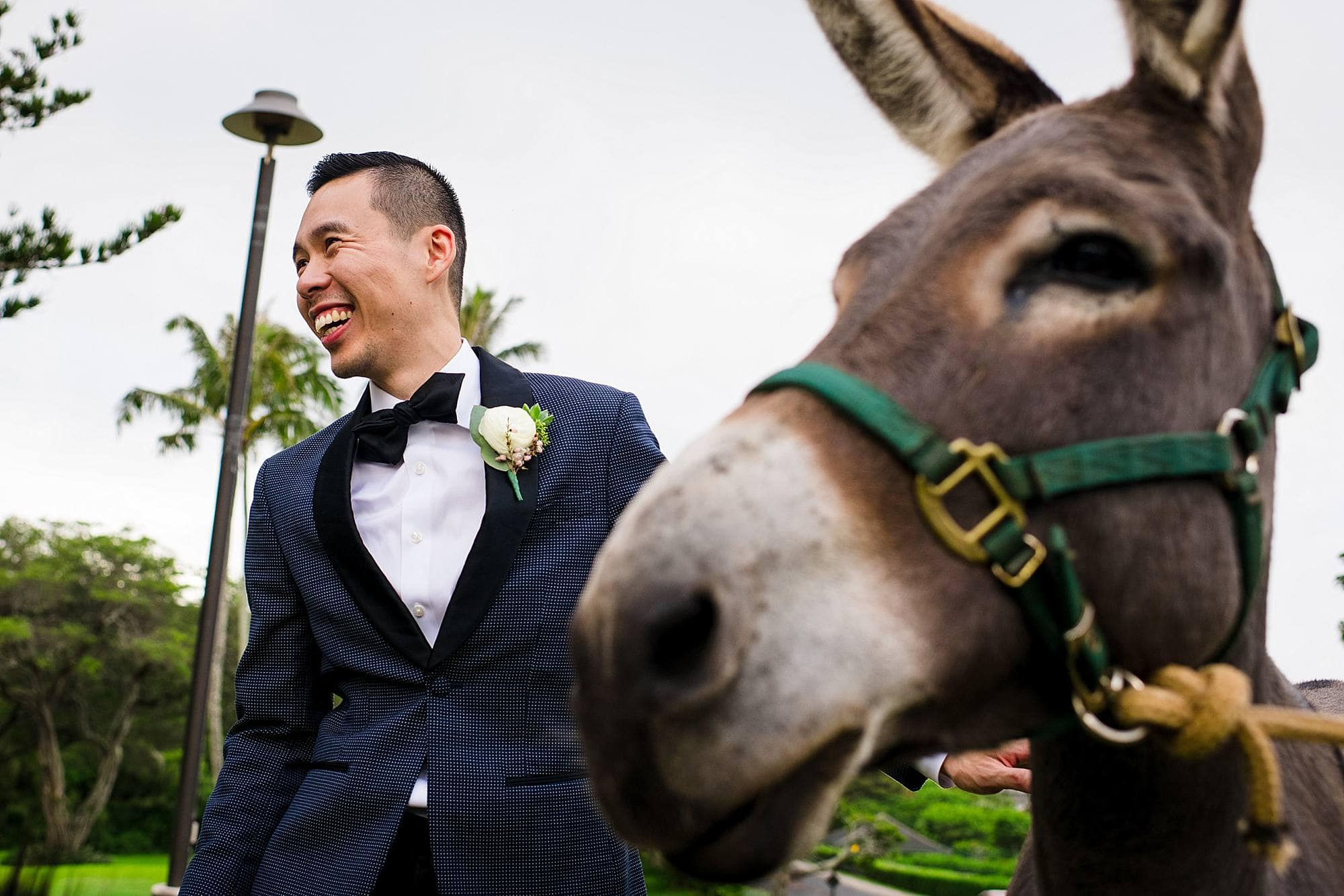 groom with donkey at cocktail hour