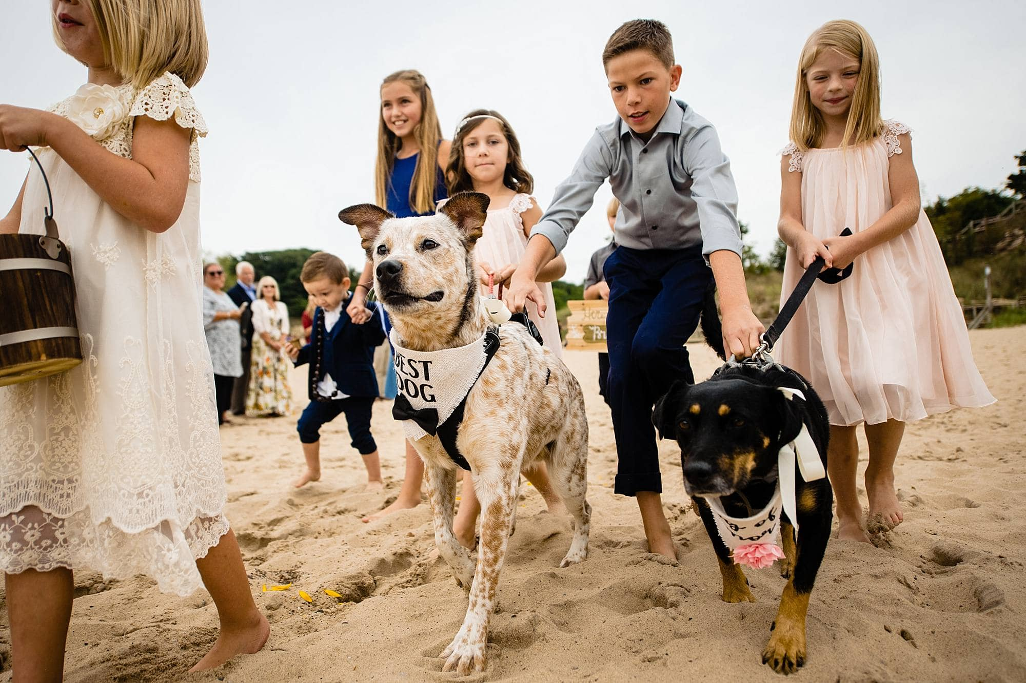 best dog and dog of honor walking down aisle
