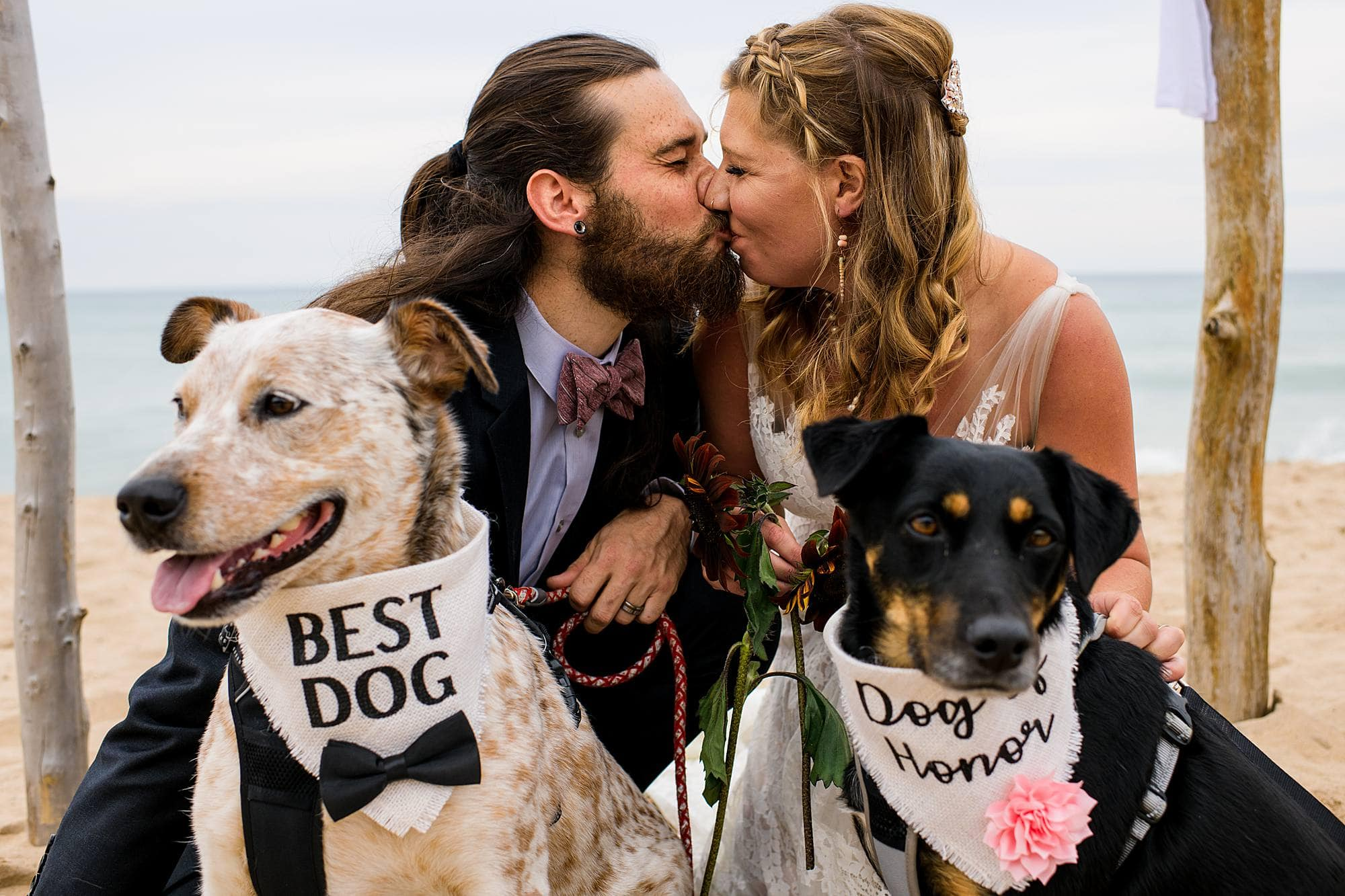 best dog and dog of honor during wedding