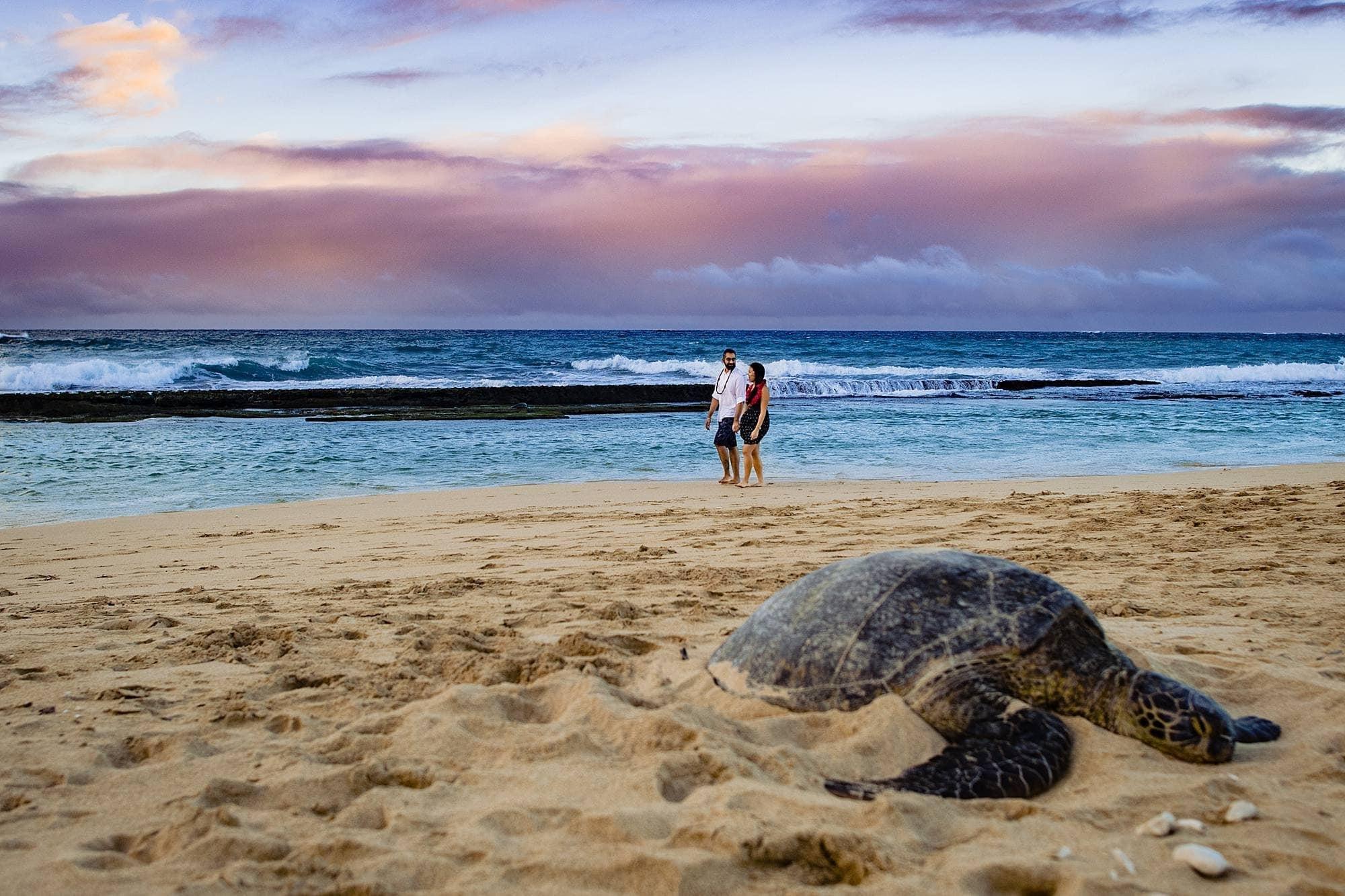 sunset portraits in Maui, hawaii